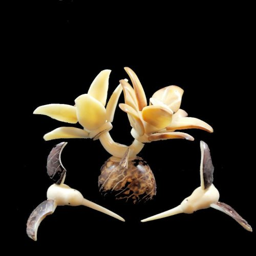 Colibris sur fleurs taillés dans la graine de tagua