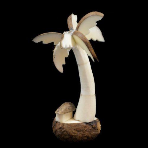 Palmier case taillé dans la graine