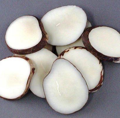 Tranche d'ivoire vegetal