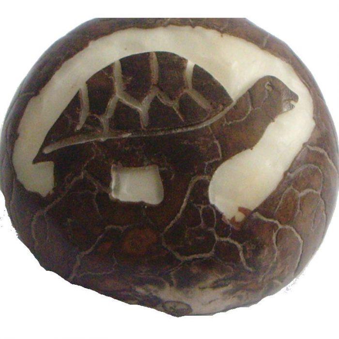 Graine de tagua gravure tortue de terre