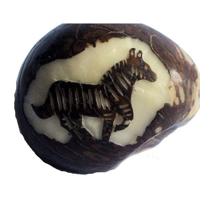 Graine de tagua gravure zèbre