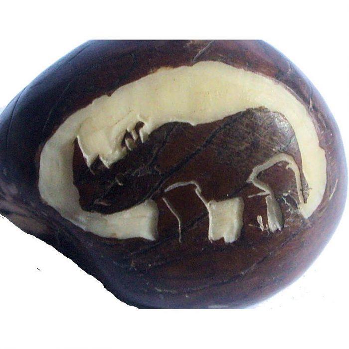 Graine de tagua gravure rhinocéros