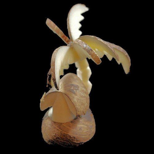 Palmier case taillé dans la graine de tagua
