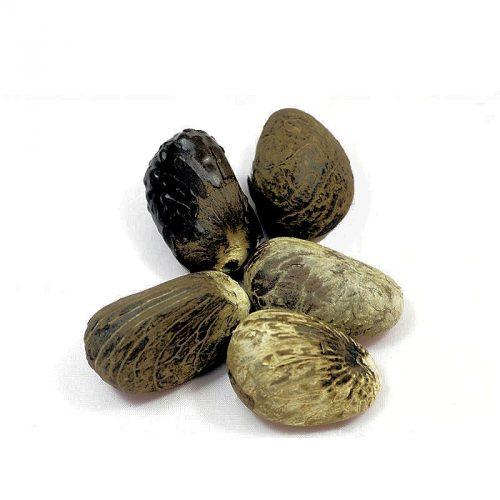 Petite graine brute de Tagua